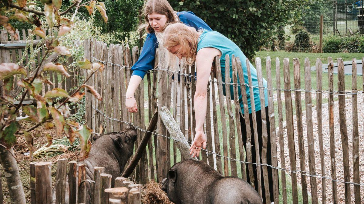 2 vrouwen aaien hangbuikzwijnen Melkhuisje feiten over varkentjes